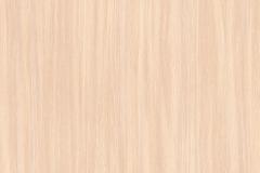 8622_Milky Oak